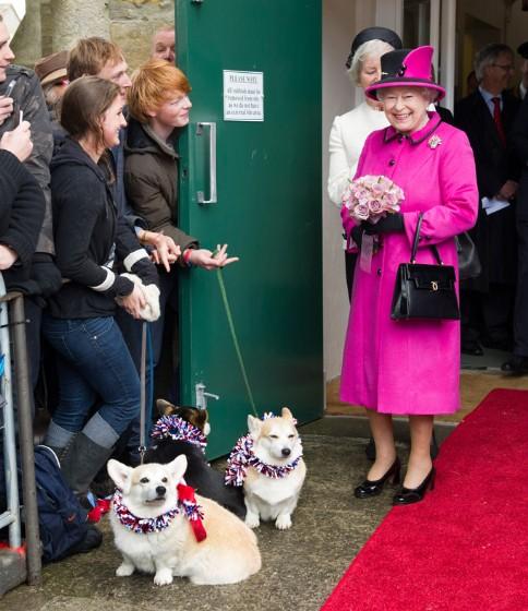 Queen-Elizabeth-Corgis-Dorgis-Royal-Family-11072013-05-484x560